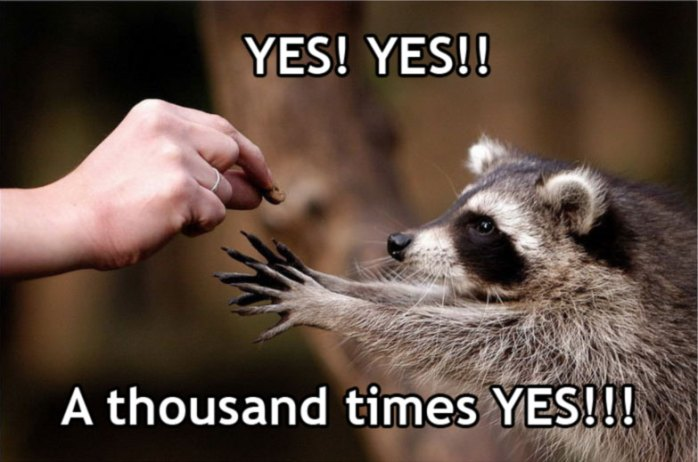 A raccoon says yes